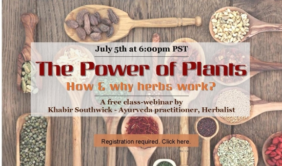 The power of plants - How & why herbal treatments work?
